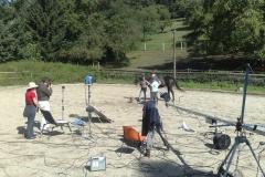 thinking_horse_7_20090831_1830765808