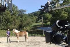 thinking_horse_8_20090831_1089380570