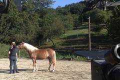 thinking_horse_9_20090831_1900528716